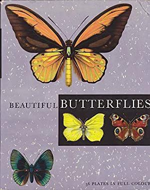 Beautiful Butterflies: Moucha, J.