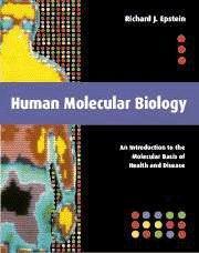 Human Molecular Biology: An Introduction to the: Epstein, Richard J.:
