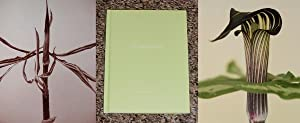 ONE PICTURE BOOK: A. ANGUSTATUM - Scarce Pristine Copy of The Limited Edition: Signed by Ron Van ...