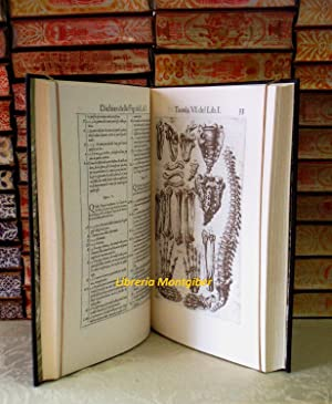 Hiftoria dell'Anatomia: Valuerde, Giouanni