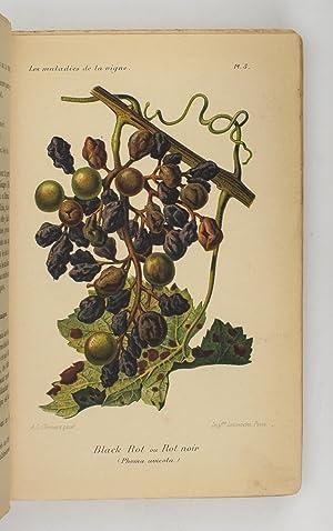Les Maladies et Insectes de la Vigne.: BRUNET, Raymond. [Wine]