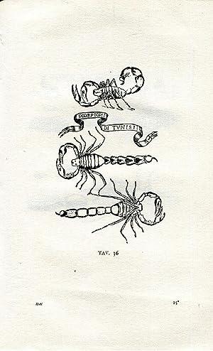 Esperienze intorno alla generazione degli insetti. Scritte: Redi Francesco