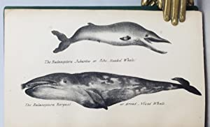 The Natural History of the Order Cetacea, and the Oceanic Inhabitants of the Artic Regions.: ...