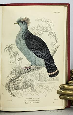 Ornithology: Pigeons (The Naturalist's Library, volume IX).: Selby, P. John