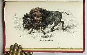 Mammalia: Deer, Antelopes, Camels, etc. + Mammalia: Goats, Sheep and Oxen, etc. (The Naturalist&#...