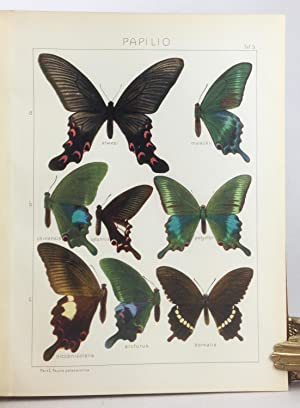 The Macrolepidoptera of the World, section I, volume 1: The Palaearctic Butterflies (Rhopalocera), ...