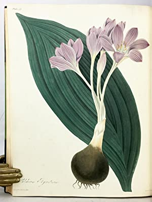 FLORAL ILLUSTRATIONS OF THE SEASONS, Consisting of Drawings From Nature of Some of the Most ...