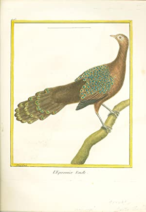 L'Eperonnier Femelle (Asiatic Peacock) Hand-Colored Plate: Buffon, G. L. L., and Martinet, F. ...