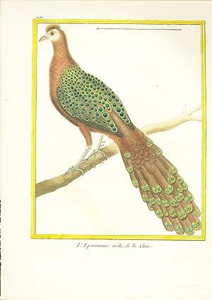 L'Eperonnier male de la Chine (Asiatic Peacock) Hand-Colored Plate: Buffon, G. L. L., and ...