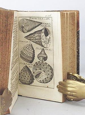 Testaceo-Theologia, oder Gründlicher Beweis des Daseyns und der vollkommnesten Eigenschaften ...