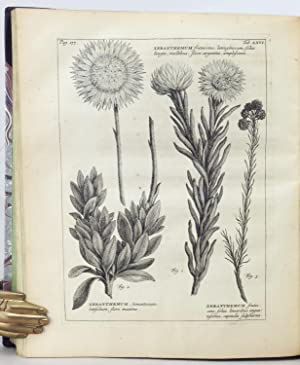 Rariorum Africanarum Plantarum, ad vivum delineatarum, Iconibus et descriptionibus illustratarum, ...