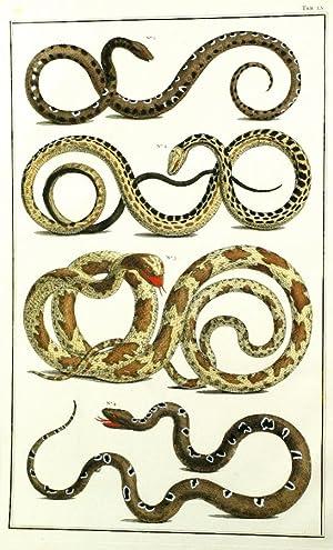 Snakes from Ceylon, TOMUS II, TABULA LV.: Seba, Albertus