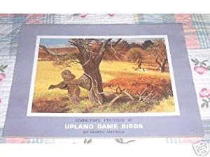 Upland Game Birds- Remington portfolio of 12: Remington Arms; Illustrator