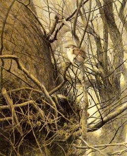 WINTER WREN; A Fine Limited Edition Print: Ching, Ray Harris;
