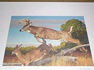 "Whitetail Deer"" - 1982 Conservation Print **: Kuhn, Bob; Boone"