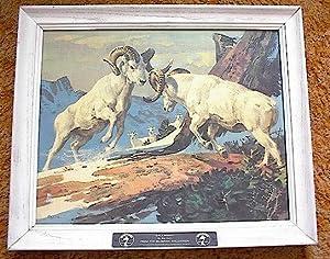 Dall Sheep ; By Bob Kuhn, From: Kuhn, Bob; Seagrams