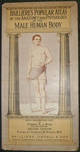 Baillieres's Popular Atlas of the Anatomy and Physiology of the Male Human Body: Biss, Hubert ...