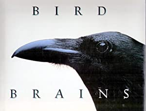 BIRD BRAINS. THE INTELLIGENCE OF CROWS, RAVENS, MAGPIES, AND JAYS: Savage, Candace