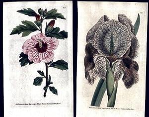 The Botanical Magazine of Flower-Garden Displayed. Volumes: Curtis (William.)