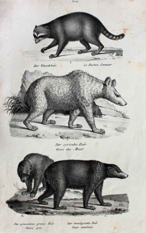 Bären datieren uk