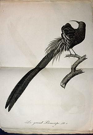 Oiseaux dorés ou à reflets métalliques: AUDEBERT (Jean Baptiste) et VIEILLOT (...