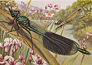 Les libellules (odonates) *: ROBERT Paul-A. :
