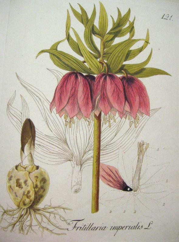 Abbildung aller oekonomischen Pflanzen. Bd. 2. (v. 8).: Kerner, Johann Simon.