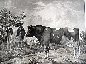 Abbildungen der Rindvieh- und andern Hausthier-Racen auf den Privatgütern Seiner Majestät...