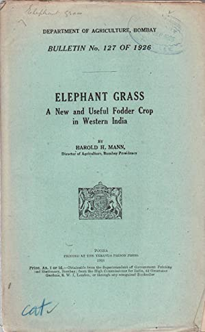 Elephant Grass. A New and Useful Fodder: MANN, HAROLD H.