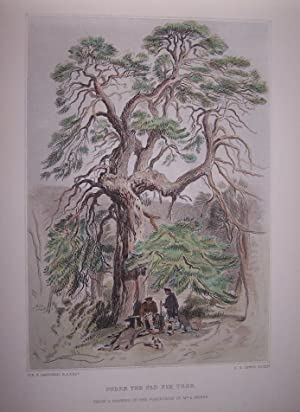 Under the Old Fir Tree [ Hand-colored steel engraving ]