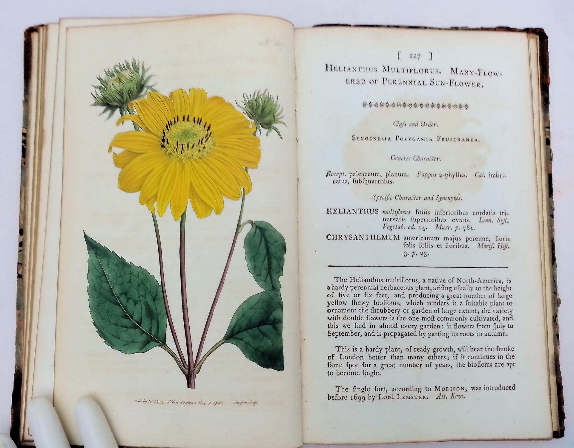 The Botanical Magazine Or Flower Garden Displayed Vol Vii By