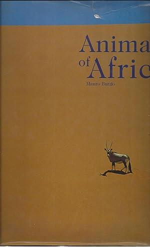 Animals Of Africa: Burzio, Mauro
