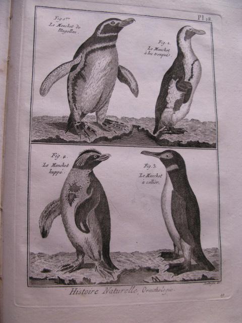 Tableau Encyclopedique Et Methodique Des Trois Regnes De La Nature Ornithologie Birds By Bonnaterre M L Abbe 1792 Charles Russell Aba Ilab Est 1978