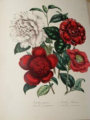THE LADIES FLOWER-GARDEN OF ORNAMENTAL GREENHOUSE PLANTS.: LOUDON, MRS JANE