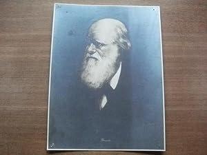 Charles Darwin: Rumpf