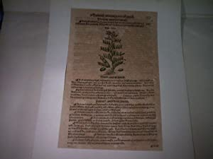 Darstellung aus Kräuterbuch. Faba.