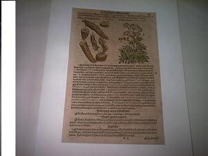 Darstellung aus Kräuterbuch.Bylinach a Stromjch. Costiradices. Pseudocostus.