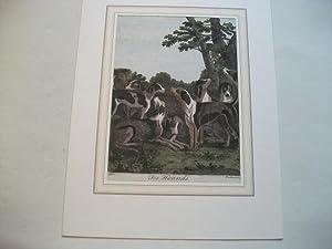 Fox Hounds.: Dodd