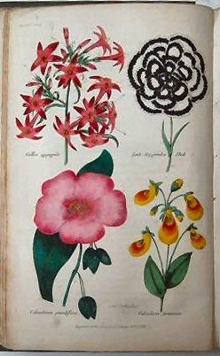 THE FLORICULTURAL CABINET, AND FLORIST'S MAGAZINE. Conducted by Joseph Harrison, Gardener to ...
