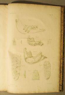 Description anatomique d'un elephant Male: Camper, Pierre