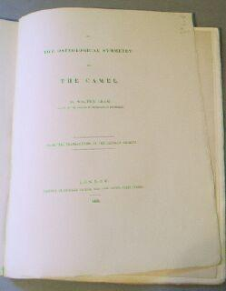 On the Osteological Symmetry of the Camel: Adam, Walter