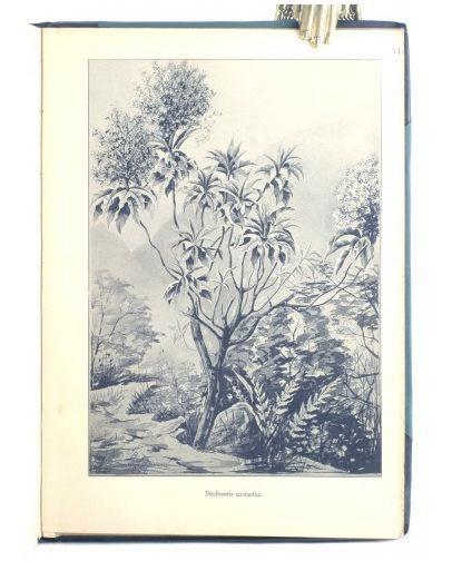 Estudios sobre la Flora de las Islas de Juan Fernández: Johow, F.
