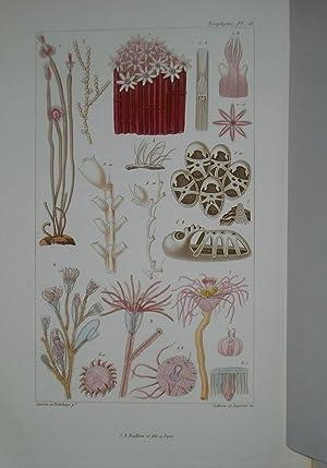 Les vers et les Zoophytes décrits et Figurés D'après La Classification De...