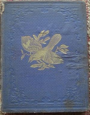 THE BOYS AND GIRLS' ILLUSTRATED BIRD BOOK.: COLMAN, JULIA