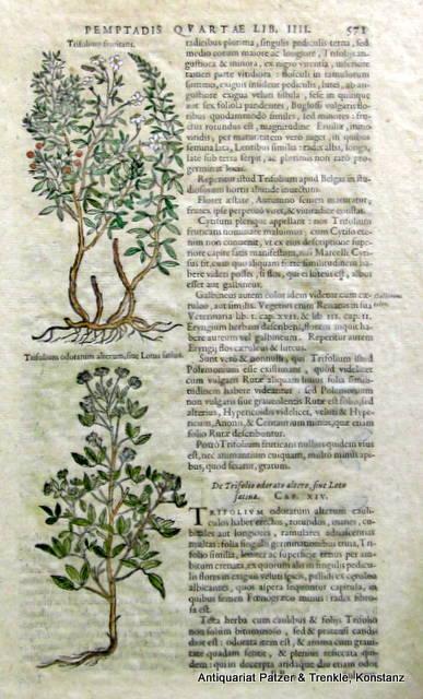 2 kolor. Holzschnitte auf einem Einzelblatt aus: Kräuterbücher. -- Einzelblatt.