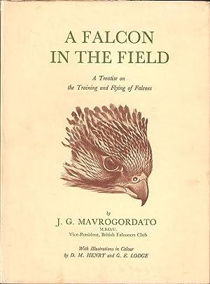A FALCON IN THE FIELD. By Jack Mavrogordato.: Mavrogordato (Jack).