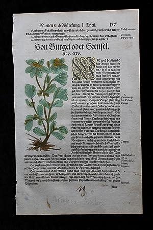 An original handcoloured leaf from Hieronymus Bock's: Hieronymus Bock