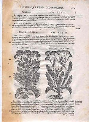 "Original Leaf dated 1560 A. D."" [Page 559-560 of And. Matthioli Comm. In Lib. Quartum ..."