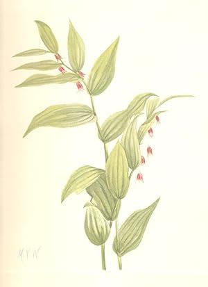 North American Wild Flowers- Pink Twistedstalk [Print]: Walcott, Mary Vaux