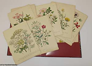 British Wild Flowers, 29 Hand Coloured plates: Loudon, (Mrs.)